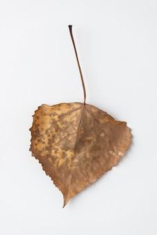 Primer plano frágil hoja de otoño
