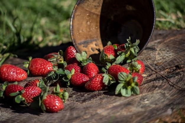 Primer plano de fresas frescas caídas de un recipiente sobre una superficie de madera
