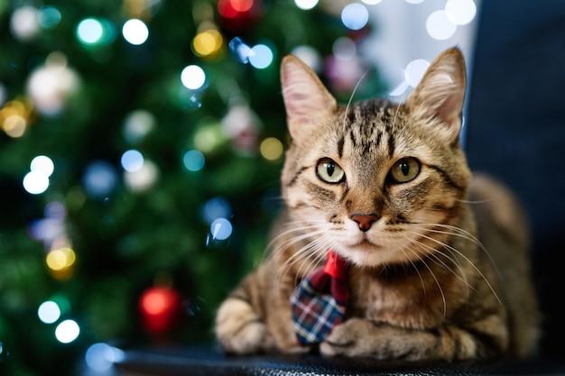 Primer plano de un gato atigrado gris de la casa que lleva una corbata a cuadros con un árbol de navidad en el telón de fondo