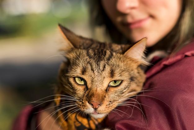 Primer plano, de, gato atigrado
