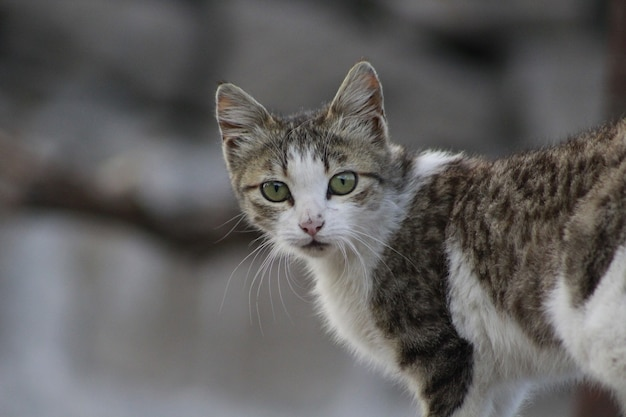 Primer plano de un gato con grandes ojos verdes