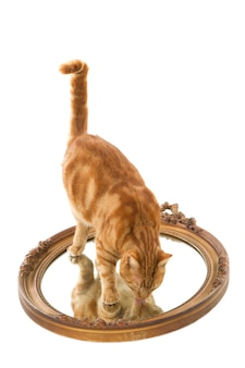Primer plano de un gato jengibre lamiendo su reflejo en un espejo viejo aislado en una superficie blanca
