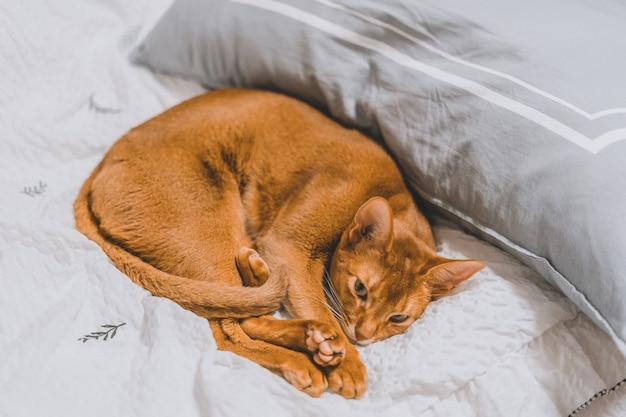 Primer plano de un gato marrón acostado en una cama
