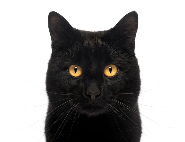 Primer plano de un gato negro mirando, aislado