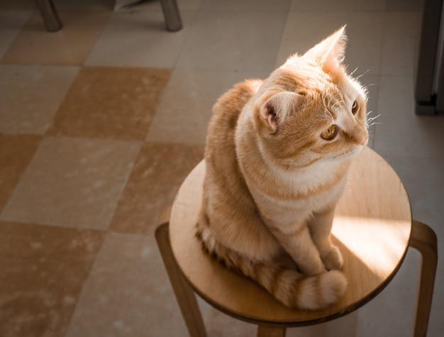 Primer plano del gato rojo. en una silla en la cocina. cuidar una mascota