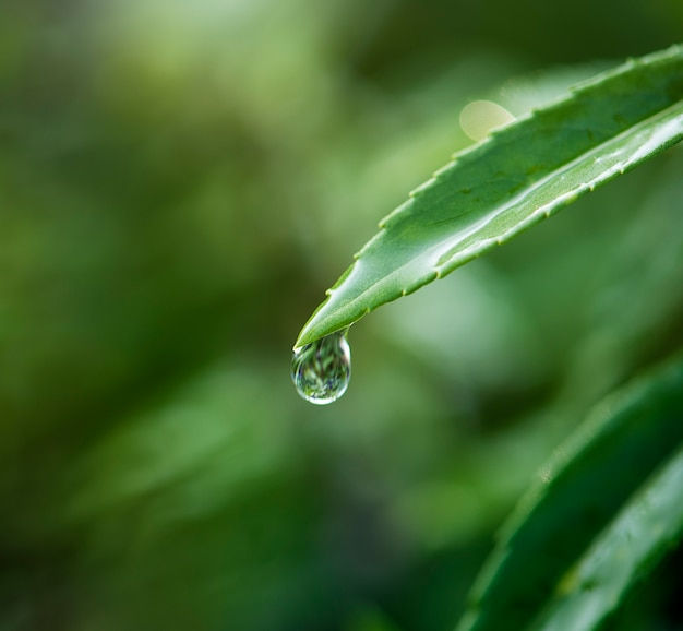 Primer plano de gota de agua en hojas