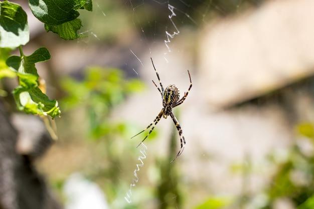 Primer plano de gran araña en una web en la naturaleza