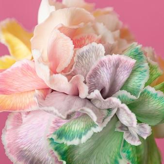 Primer plano de hermosa flor florecida