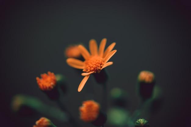Primer plano de una hermosa flor naranja