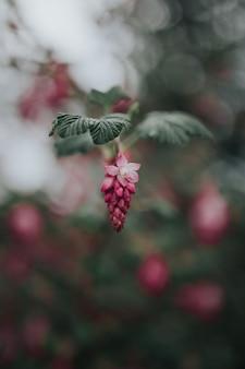 Primer plano de una hermosa planta exótica colgando de una rama con hojas