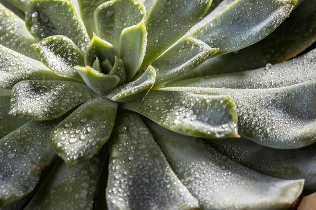 Primer plano de la hermosa planta verde