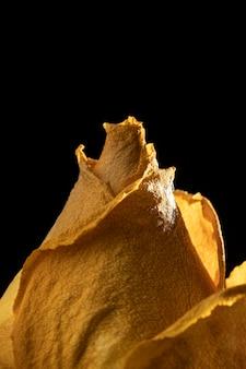 Primer plano de hermosa rosa amarilla