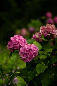 Primer plano de las hermosas flores de color púrpura en el jardín