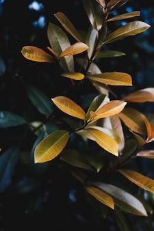 Primer plano de hermosas hojas amarillas de una planta en un jardín botánico
