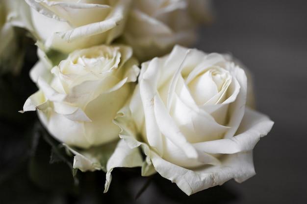 Primer plano de hermosas rosas frescas