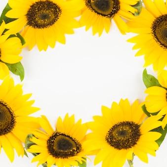 Primer plano del hermoso marco de girasoles amarillos sobre fondo blanco