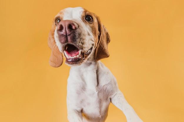 Primer plano hermoso perro feliz