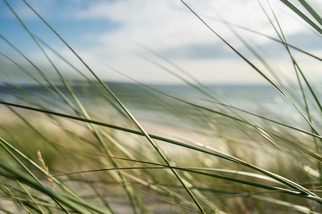 Primer plano de hierba bajo la luz del sol y un cielo nublado con un fondo borroso