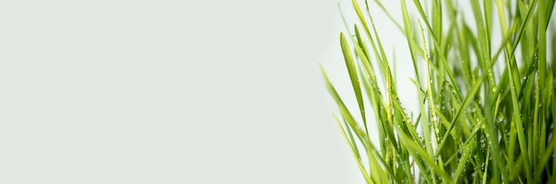 Primer plano de hierba verde natural como fondo