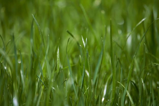 Primer plano de hierba verde