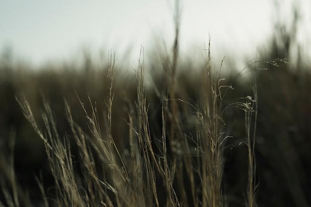Primer plano de la hierba