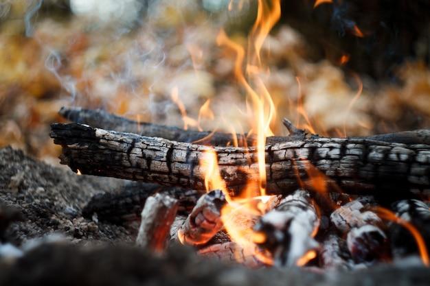 Primer plano de una hoguera ardiente en el bosque, leña y brasas en llamas en el bosque de otoño