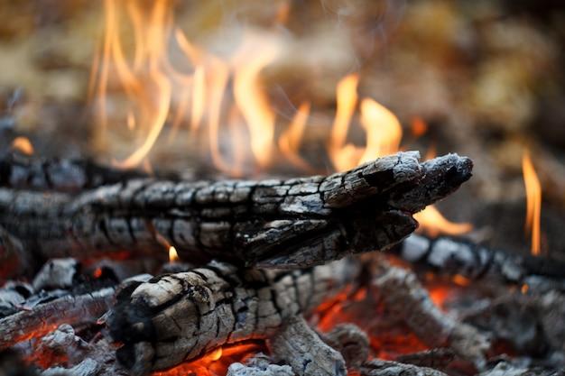 Primer plano de una hoguera ardiente en el bosque