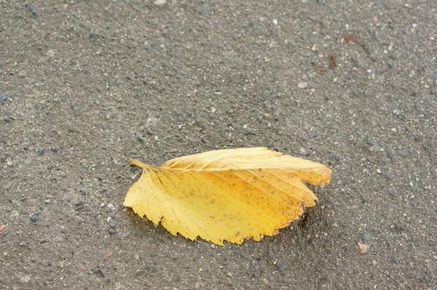 Primer plano de una hoja amarilla sobre el asfalto