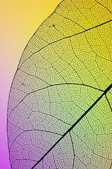 Primer plano de la hoja verde de otoño
