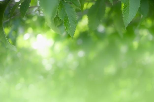 Primer plano de la hoja verde vista de la naturaleza en verdor borroso