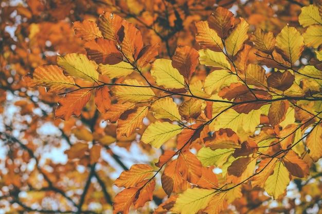 Primer plano de hojas amarillas rojas de fondo, vista inferior