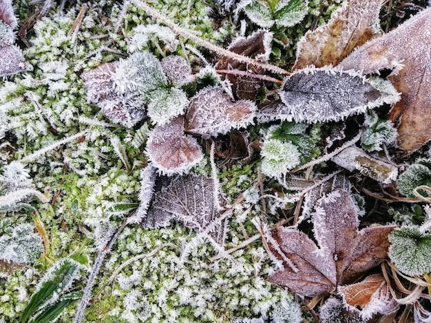 Primer plano de hojas congeladas en un bosque en stavern, noruega