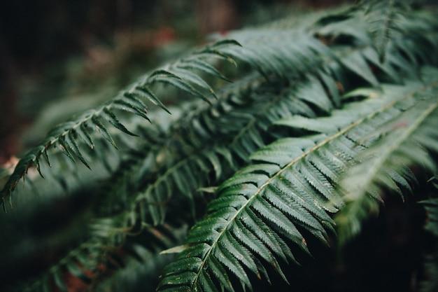 Primer plano de hojas de helecho en un jardín bajo la luz del sol con un fondo borroso