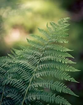 Primer plano de hojas de helecho bajo la luz del sol con un fondo borroso