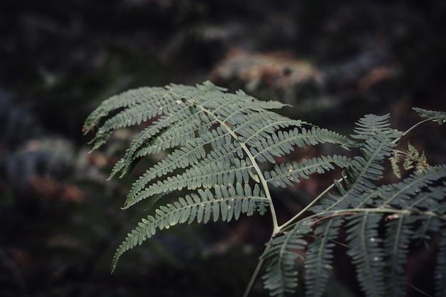 Primer plano de hojas de helecho rodeado de vegetación en un jardín.
