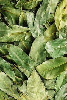Primer plano hojas de laurel verde