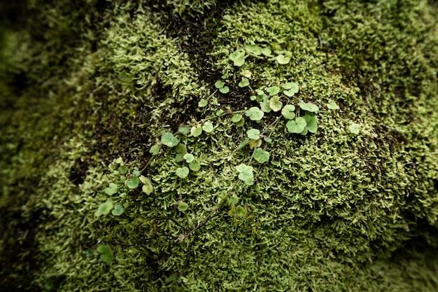 Primer plano de hojas y musgo