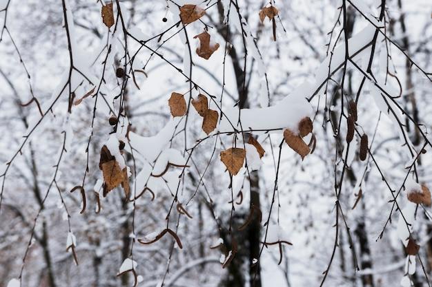 Primer plano de hojas de otoño cubiertas de nieve