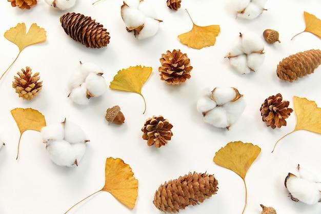 Primer plano de hojas de otoño, la planta de algodón madura y cono de coníferas sobre fondo blanco.
