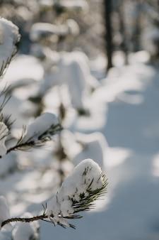 Primer plano de hojas perennes cubiertas de nieve bajo la luz del sol con un fondo borroso