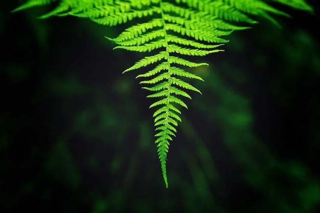 Primer plano de las hojas de una rama que crece perfectamente alineada