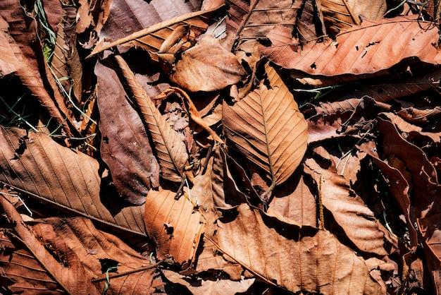 Primer plano de hojas secas en otoño
