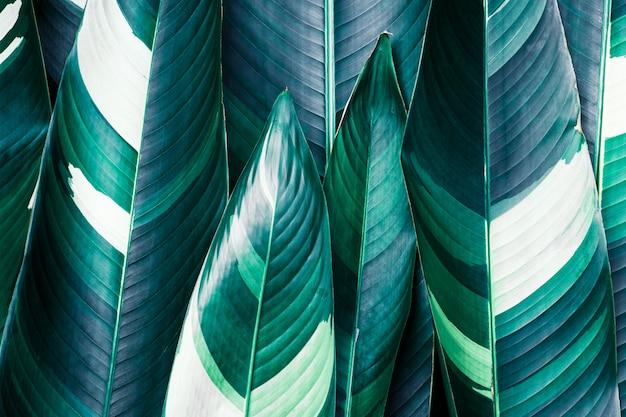 Primer plano de hojas tropicales exóticas