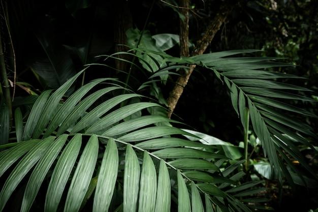 Primer plano de hojas tropicales con fondo borroso