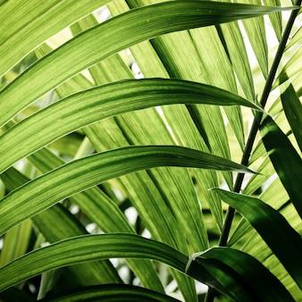 Primer plano de hojas tropicales verdes