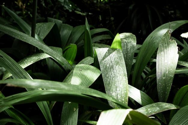 Primer plano de hojas tropicales