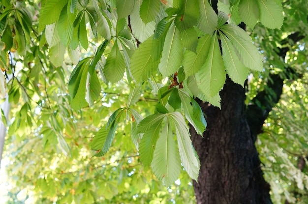 Primer plano de hojas verdes en un árbol