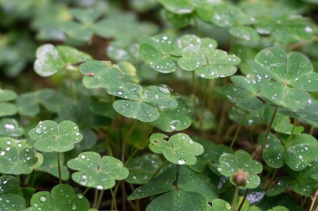 Primer plano de hojas verdes cubiertas con gotas de rocío