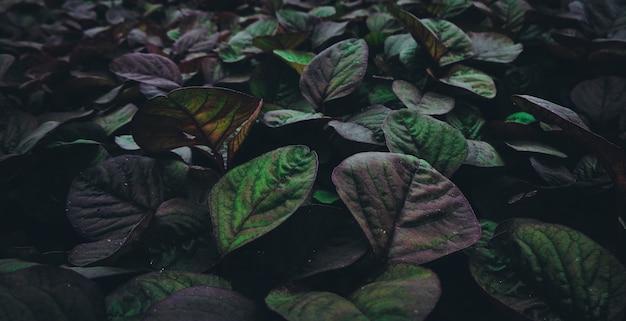 Primer plano horizontal de plantas verdes y púrpuras que crecen en un invernadero.