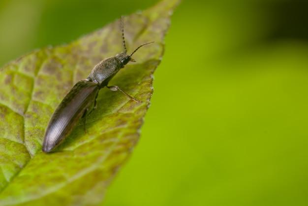Primer plano de un insecto negro sobre la hoja verde